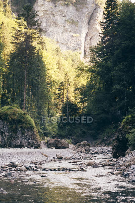 Rocky river surrounded with green trees and sun lighted rock — Stock Photo