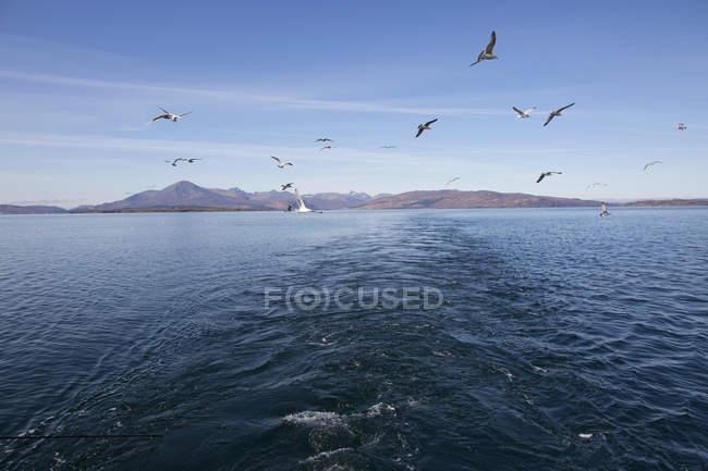 Чайки летять над водою, острів Скай, Шотландія — стокове фото