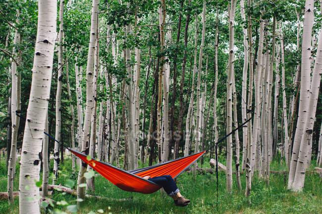 Male hiker relaxing in hammock in forest, Lockett Meadow, Arizona, USA — Stock Photo