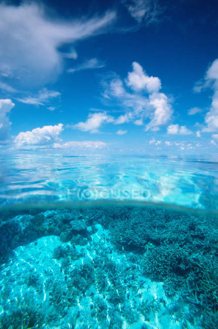 View of palau reef, federated states of micronesia — Stock Photo