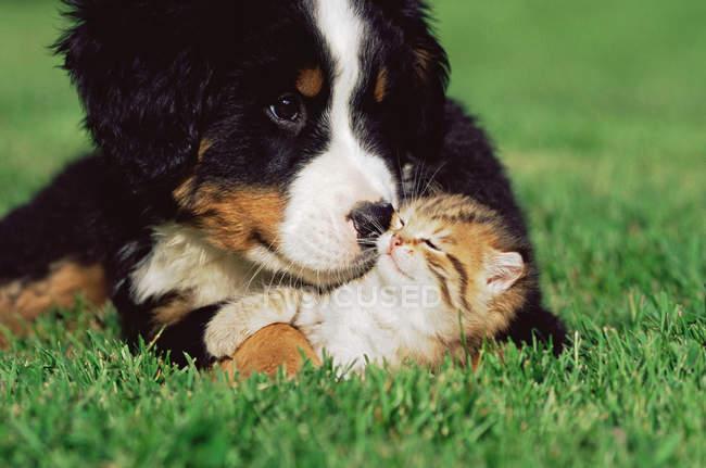 Котенок и щенок на лужайке — стоковое фото