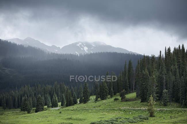 Valle verde, alberi di pino e montagne con nubi basse — Foto stock