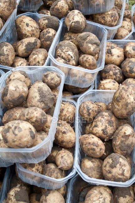 New dirty potatoes — Stock Photo