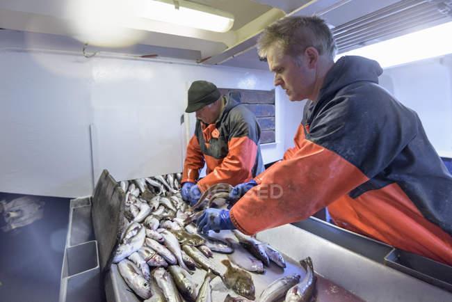 Fishermen sorting fish on trawler — Stock Photo