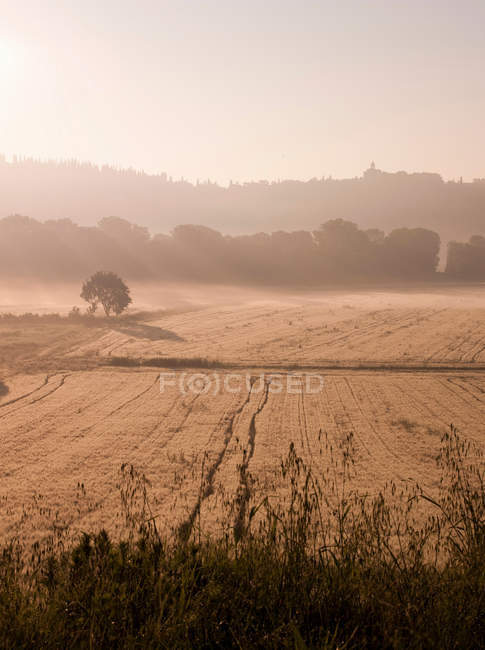 Misty rural countryside — Stock Photo