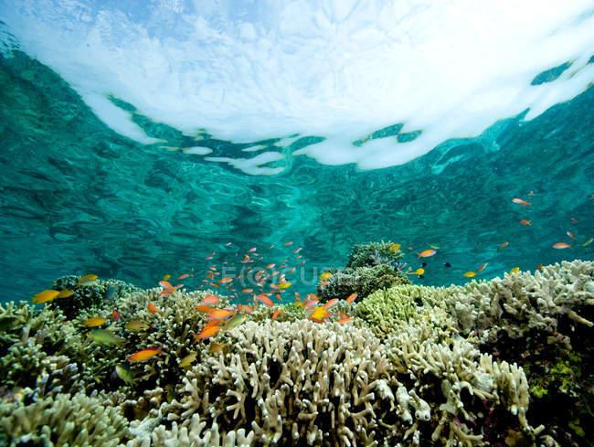Malerische Unterwasserblick Korallenriff — Stockfoto
