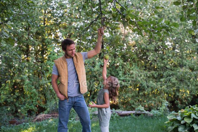 Padre ayudando hija llegar manzana en árbol - foto de stock
