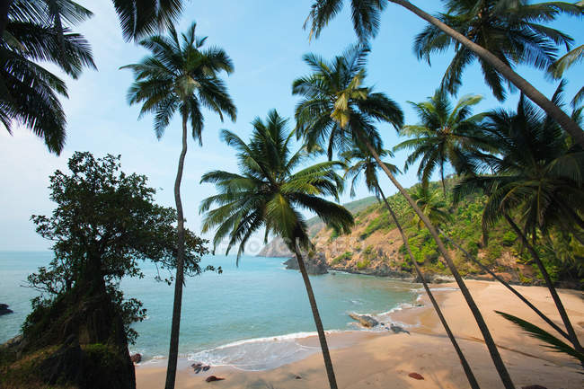 Palm trees on sandy beach, Goa, India — Stock Photo