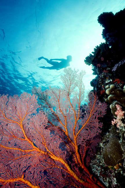 Schnorchler-Silhouette über die Korallen — Stockfoto