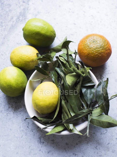 Top view of citrus fruit and leaves in bowl — Stock Photo