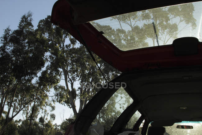 Низким углом зрения открыть багажник на открытом воздухе — стоковое фото