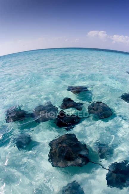 Blauer Himmel und Stachelrochen Schwimmen unter Wasser — Stockfoto