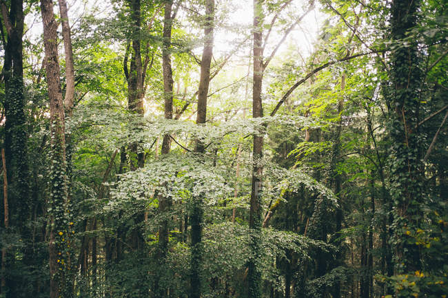 Green forest trees in bright sunlight — Stock Photo