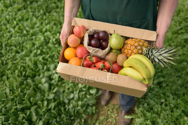 Фермер, перевозящий органические фрукты в коробке — стоковое фото