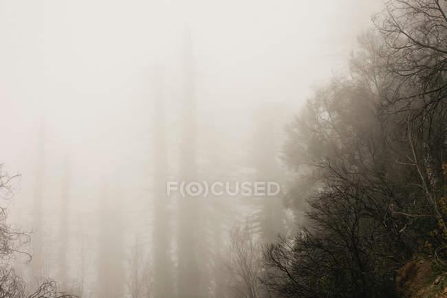 Rodando sobre árboles en bosque de niebla - foto de stock