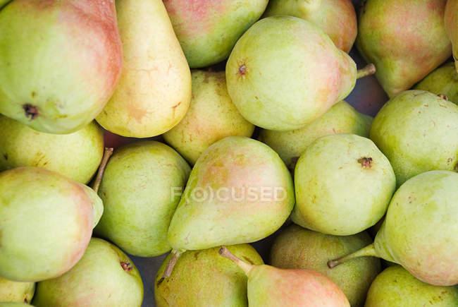Ripe appetizing pears — Stock Photo
