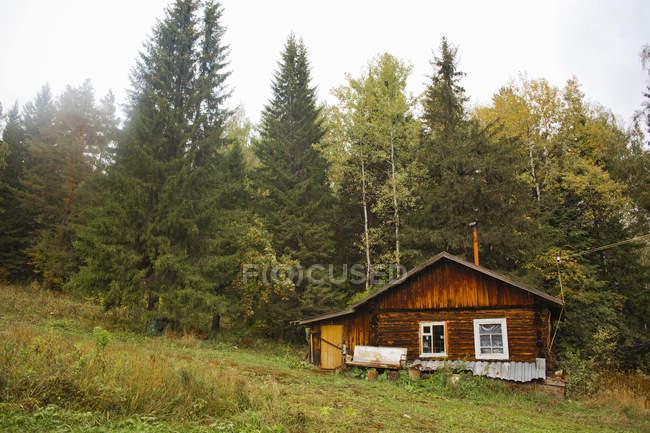Бревенчатый домик рядом с зелеными деревьями — стоковое фото
