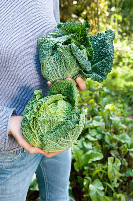 Cropped image of Woman holding cabbages — Stock Photo