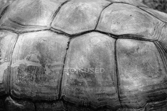 Close up shot of turtle shell, black and white — one animal