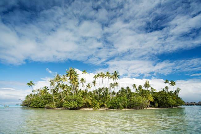 Linea costiera piena di palme verdi — Foto stock
