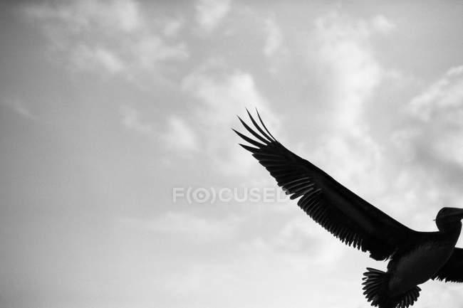 Vue recadrée des oiseaux marins dans le ciel — Photo de stock