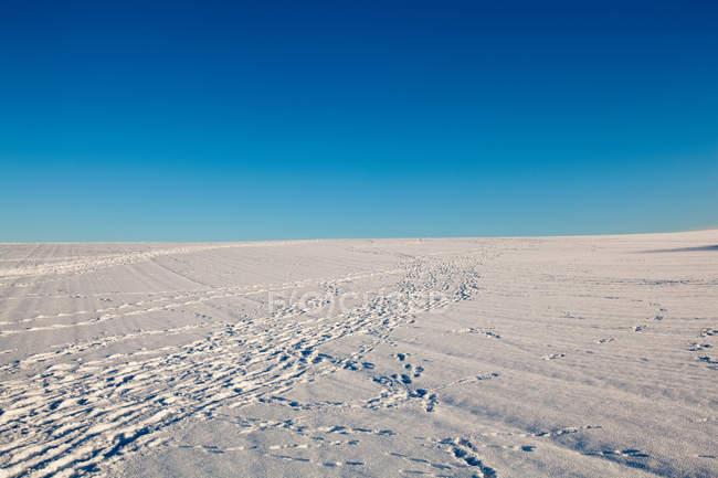 Заснеженного холма со следами — стоковое фото