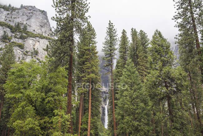 Vue sur forêt et cascade, Parc National de Yosemite, Californie, é.-u. — Photo de stock
