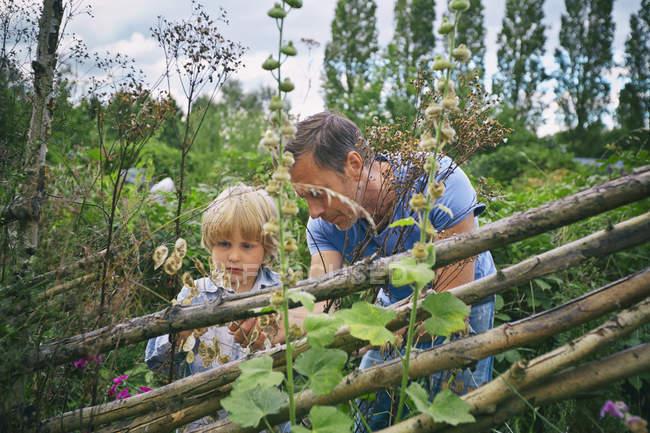 Отец и сын смотрят на растения на участке — стоковое фото