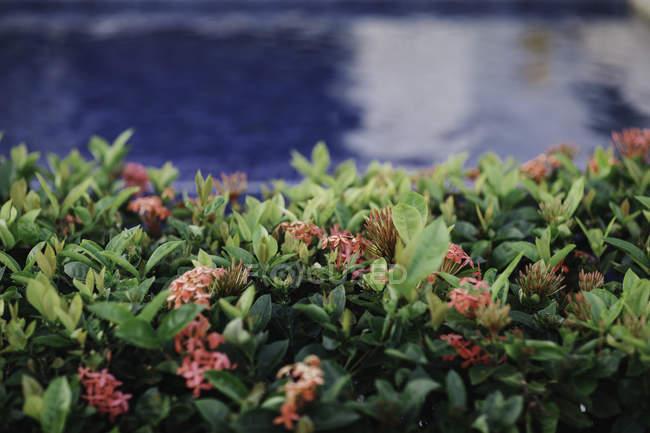 Des plantes vertes avec des fleurs sur fond d'eau trouble — Photo de stock