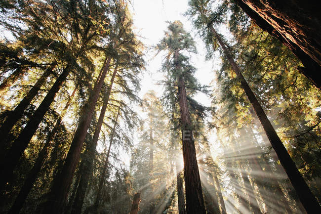 Sun streaming through trees — Stock Photo