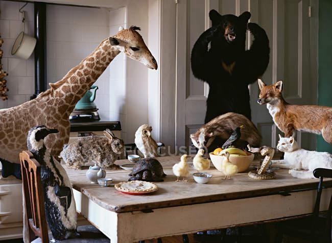 Animais recheados mortos na mesa da cozinha — Fotografia de Stock