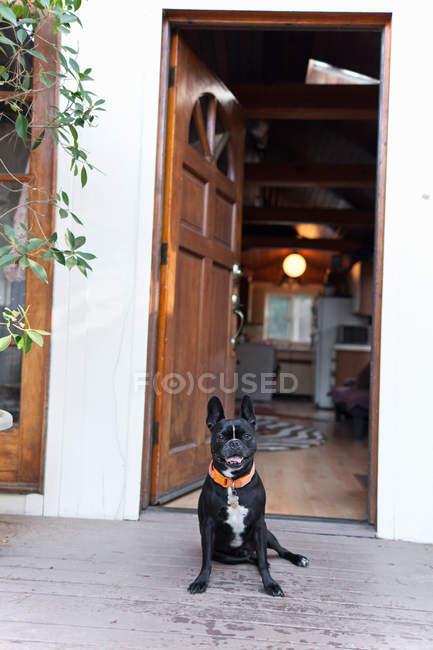 Portrait of cute funny dog sitting in front of open door — Stock Photo