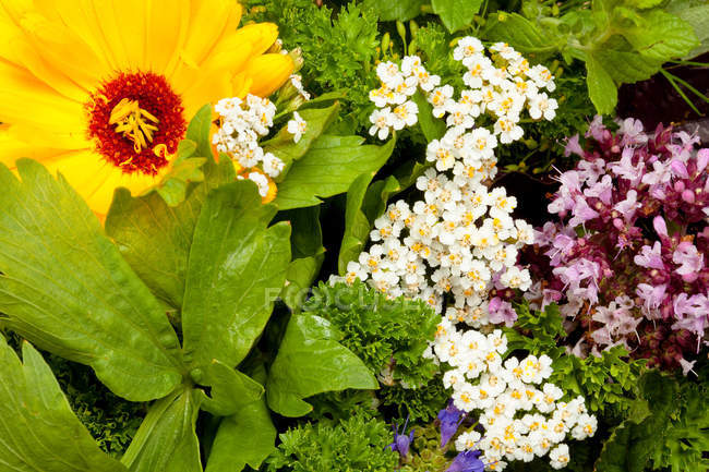 Close up of Edible flowers and herbs — Stock Photo