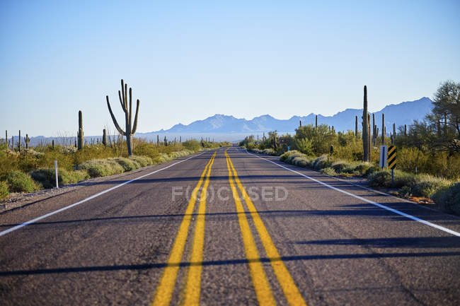 Empty sun lighted road and cacti plants, Arizona — Stock Photo