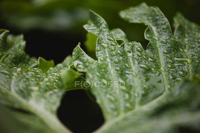 Закрыть лист капельками воды — стоковое фото