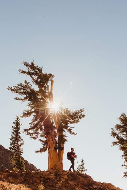 Escursionista di sesso maschile lungo la montagna illuminata dal sole, Mineral King, Sequoia National Park, California, USA — Foto stock