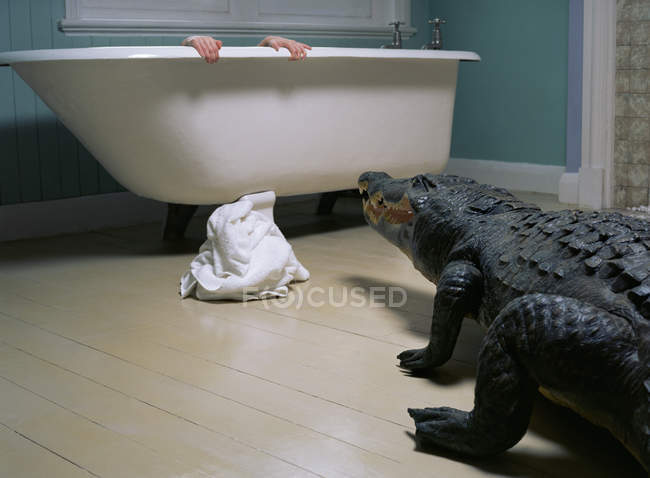 Rear view of crocodile walking in bathroom with hiding person — Stock Photo