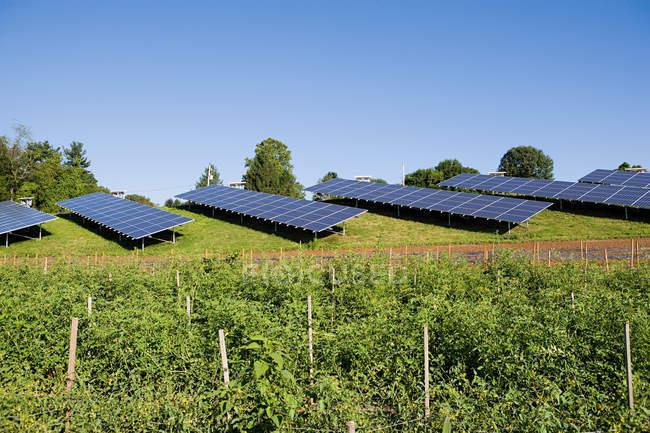 Solar panels in field — Stock Photo