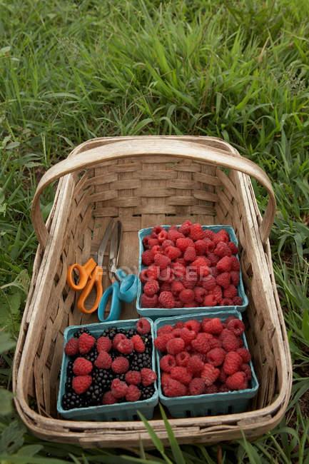 Basket of ripe blackberries and raspberries — Stock Photo