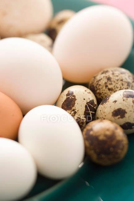Различные красочные яйца — стоковое фото