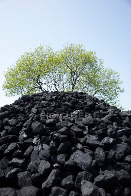 Pile of coal and trees growing on top at sunny day — Stock Photo