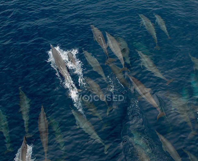 Luftaufnahme von Walen auf den Salomonen — Stockfoto