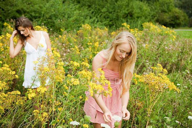 Jovens mulheres colhendo flores no campo — Fotografia de Stock