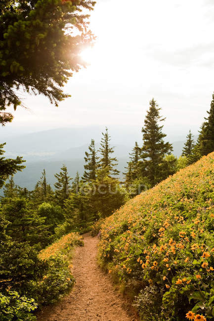 Pathway on hill with fir trees and cloudy sky — Stock Photo