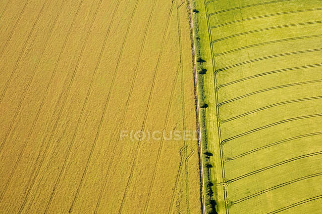 Aerial view of lush green fields in sunlight — Stock Photo