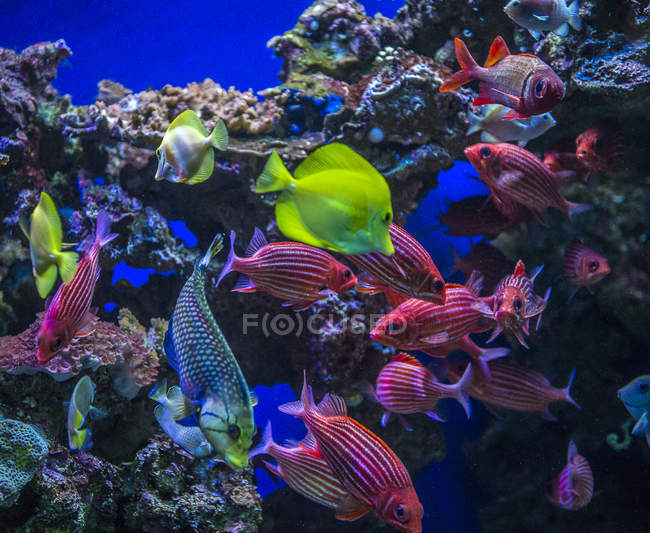 Underwater view of colorful tropical fish — Stock Photo