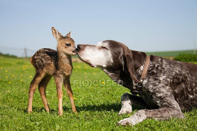 Fawn e cane seduti su erba verde — Foto stock