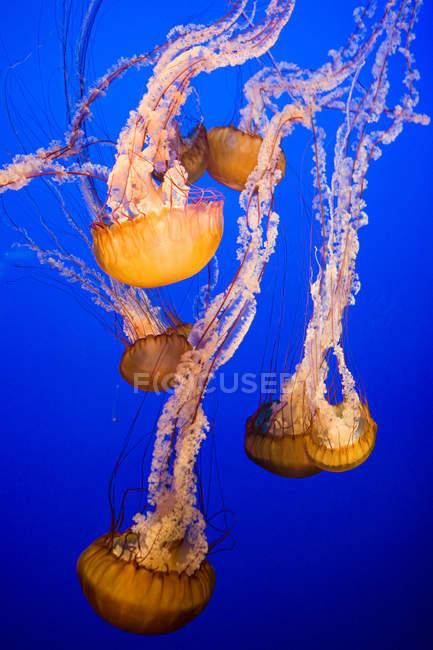 Море крапивы медузы — стоковое фото