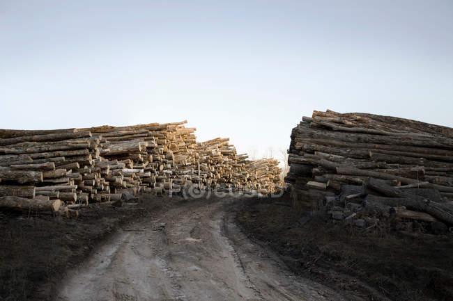 Sciages abattus placés sur route — Photo de stock