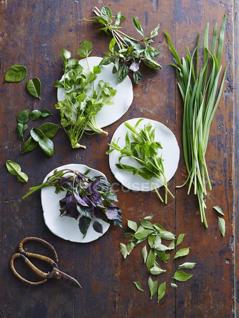 Vietnamita de coentro, hortelã, folhas de limão kaffir, folhas de curry, hortelã — Fotografia de Stock